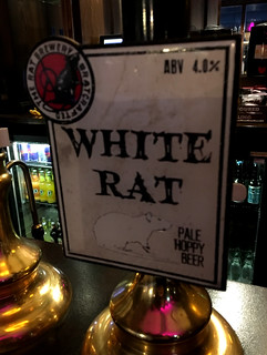 Rat. White Rat. England