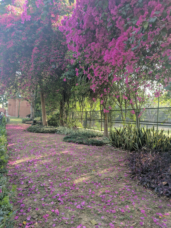 Spring in Delhi: RajGhat