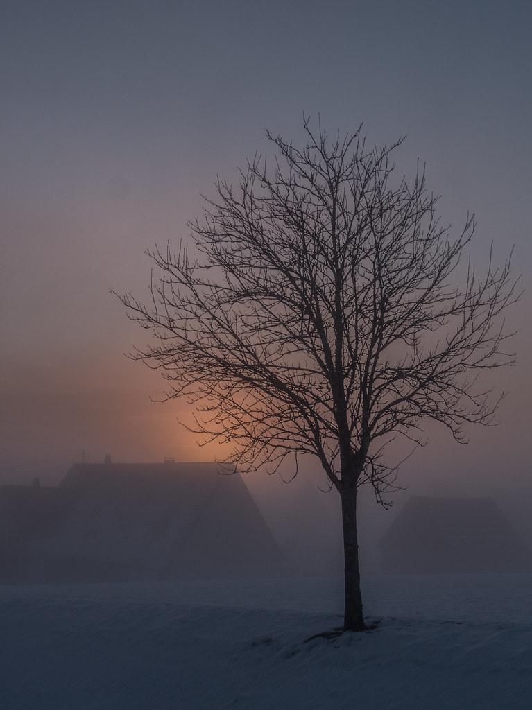 Aube d'hiver... 40596282372_7bcf4e1fca_b
