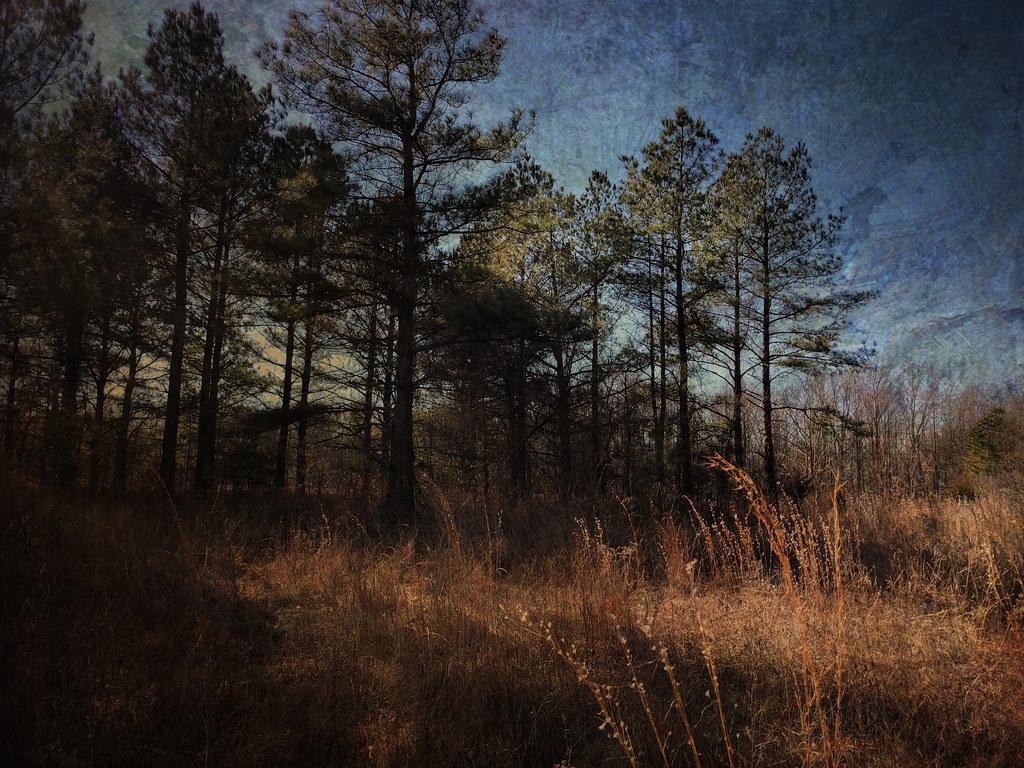 Last Light, Adkins Arboretum