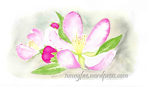 Apple blossom watercolour