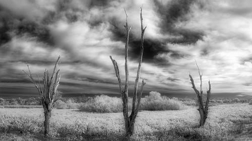 usa circlebbarreserve landscape deadtree nature water ©edrosack panorama florida tree cloud sky centralflorida bw blackandwhite swamp infrared cloudy ir marsh lakeland