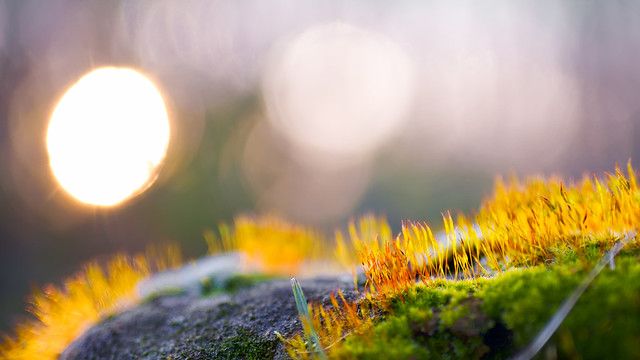 Mossy spring sunset   SONY ⍺7III (ILCE-7M3)