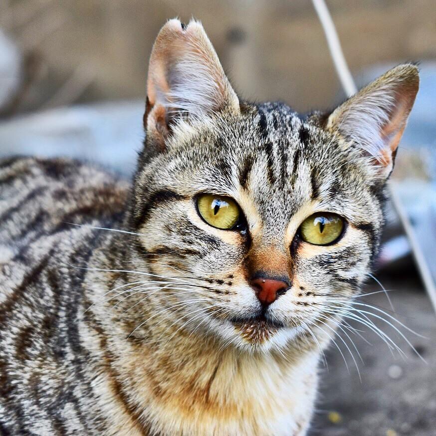 Muero De Amor Con Esta Gatita Gatos Gatoscallejeros Ca Flickr