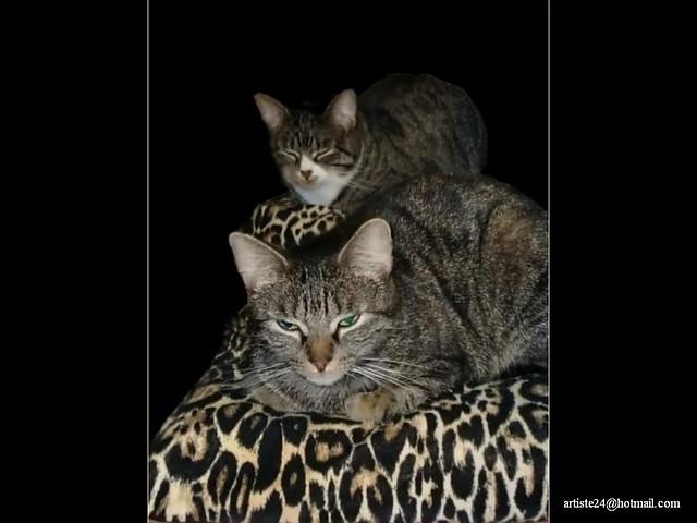 Minus Cat (6)