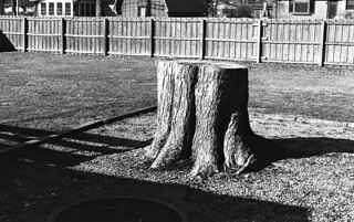 Shadows on the Stump
