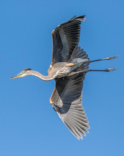outdoor seaside shore sea sky water nature wildlife 7dm2 ocean canon florida bird bif