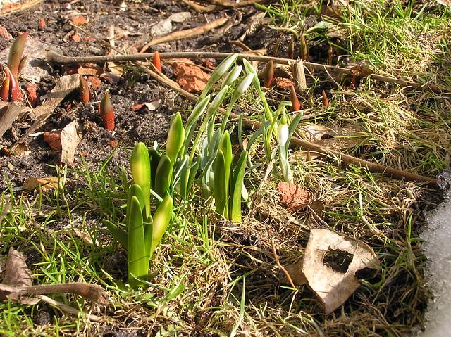 Early Signs of Spring, Kärdla, Estonia
