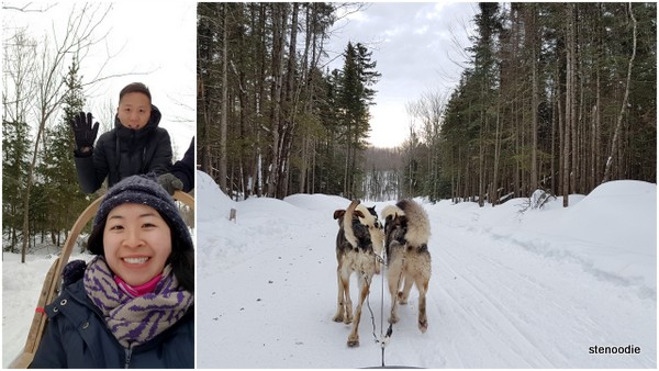 Erablière du Cap Inc. dog sled ride