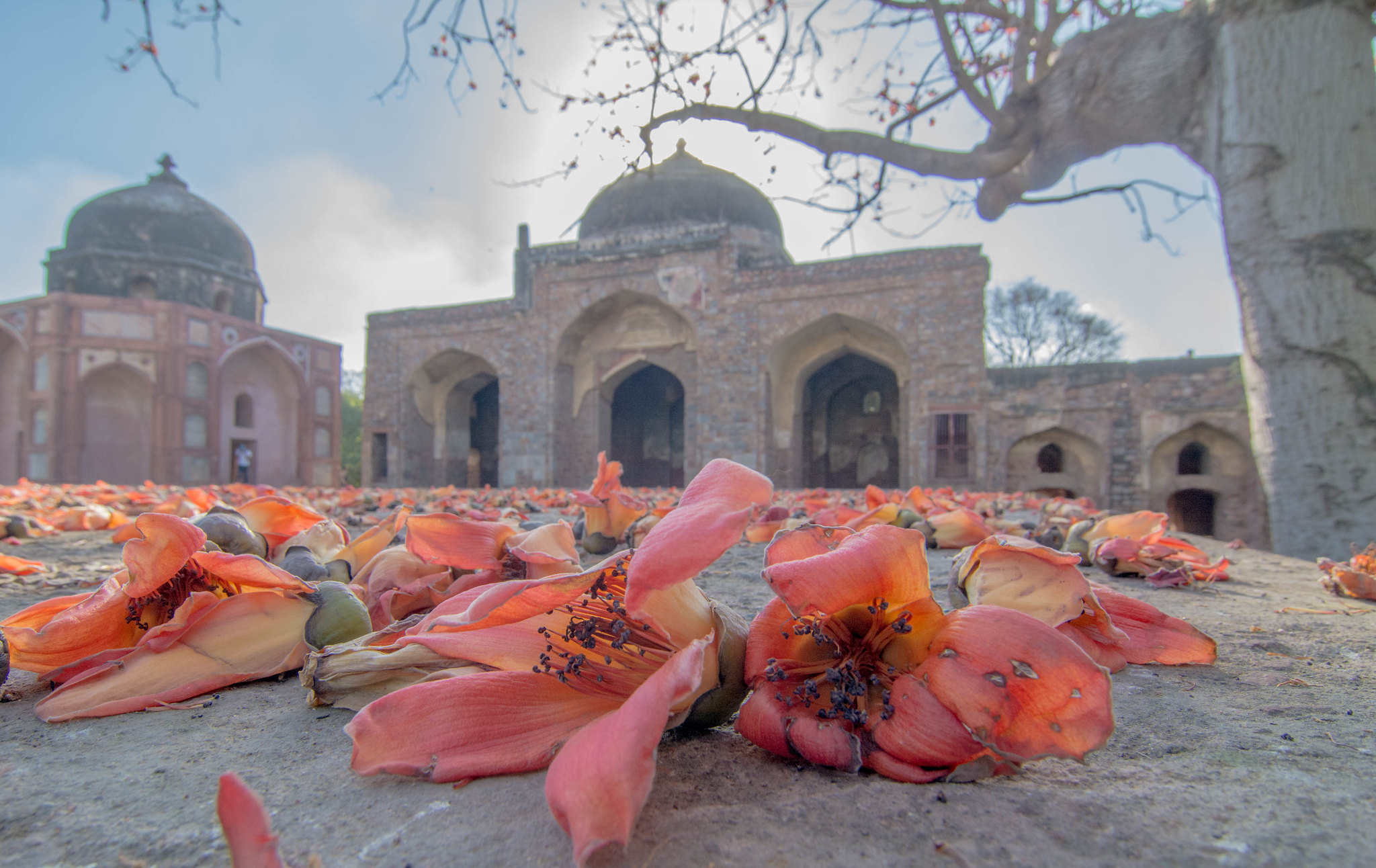 Some flowers in Humayun's Tomb complex
