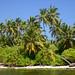12. Palmeras sobre el agua en una de las mejores islas de Maldivas