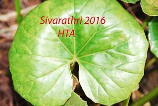 Sivarathri 2016