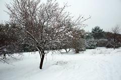 Jacou sous la neige