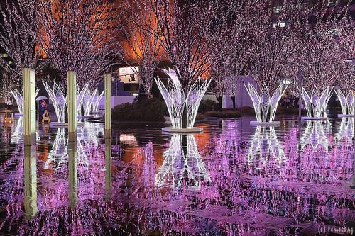 Hakata Sakura Illumination