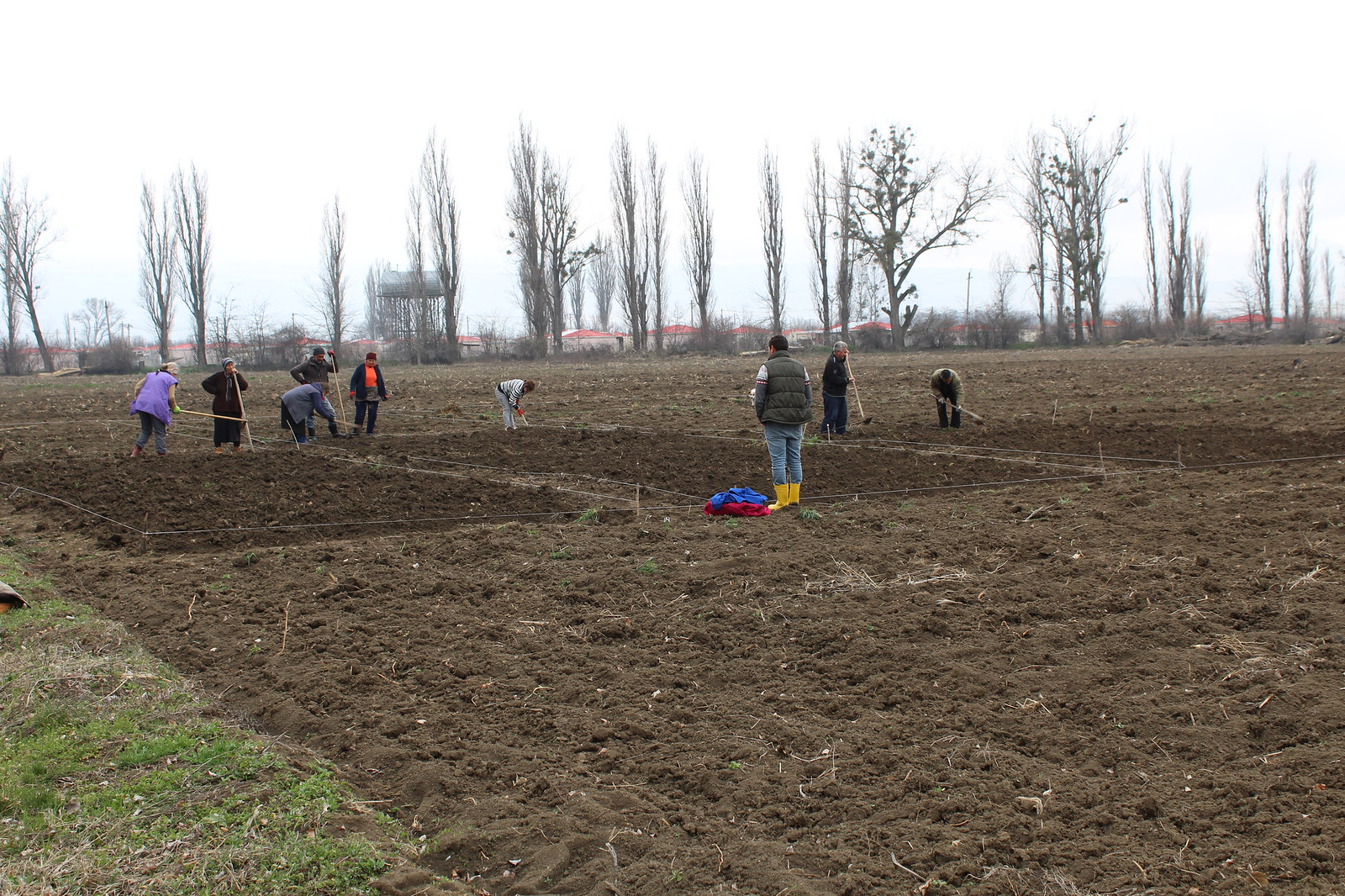 SRCA, potato planting, March 2018