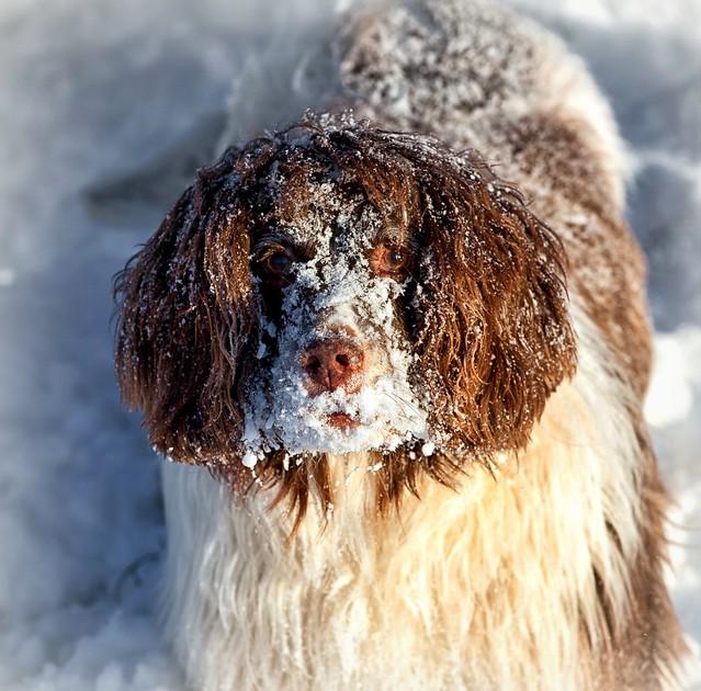Fun in the snow (6)