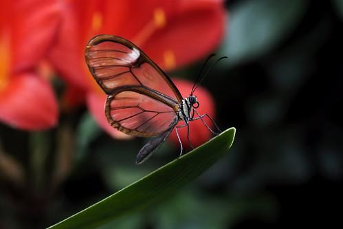 Papillons en Liberté 2018 - Photo 12