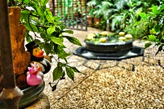 Zoid Duck in a Patio Andaluz