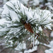 Piante e neve by davide photography