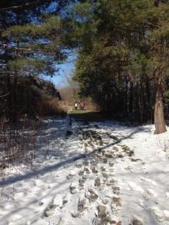 Pathway at Novak Audubon Sanctuary © Mary Anne Romito.