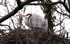 They nest 2018