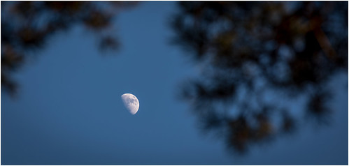 The moon .