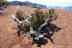Madeira 2016 - 11.Tag, Pico Ruivo, Vom Pico das Petras nach Queimadas