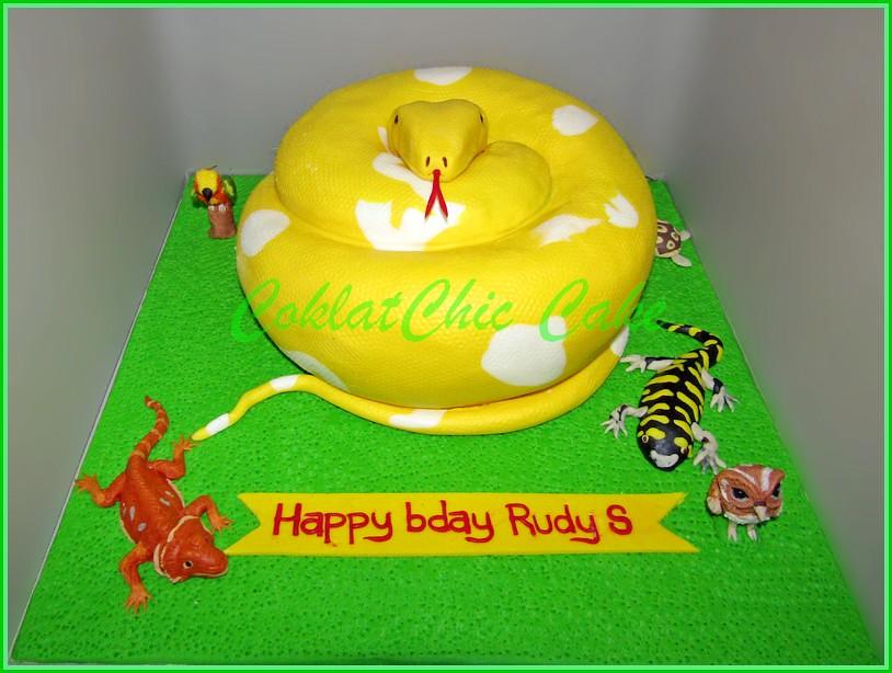 Cake Phyton Albino RUDY S 22 cm