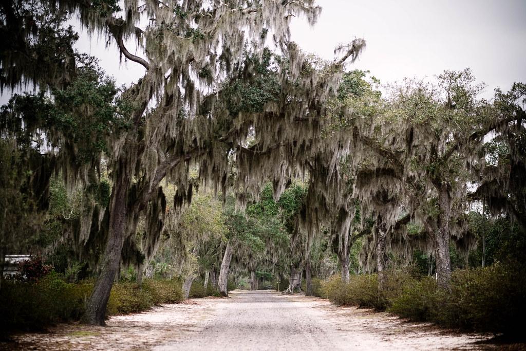 Bonaventure Cemetery, Savannah_DSF1524