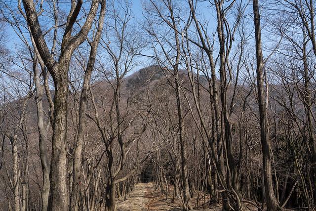 正面に武川岳