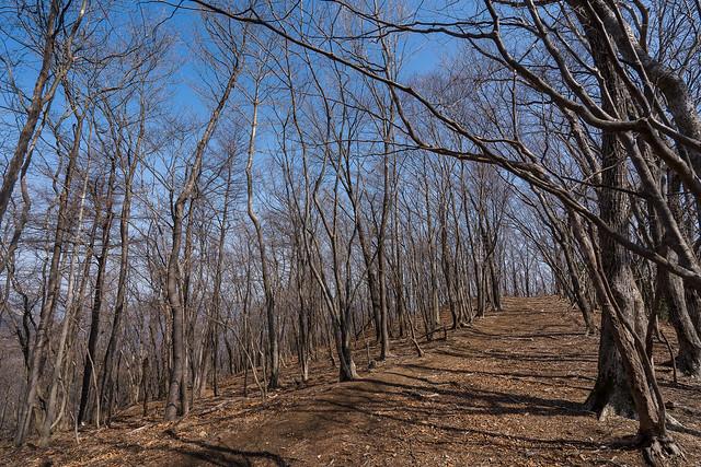 妻坂峠への樹林帯