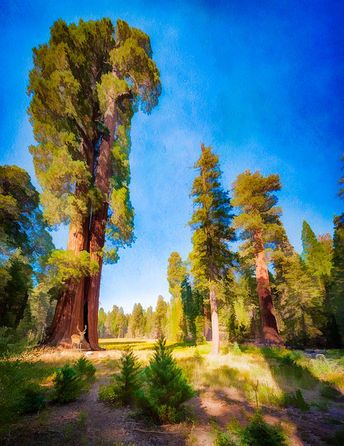 Sequoia Glade - Textured HDR Pano