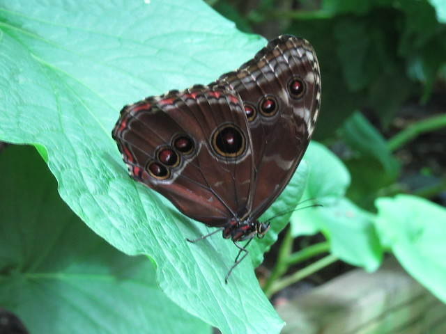 Schmetterling in der Biosphäre Potsdam