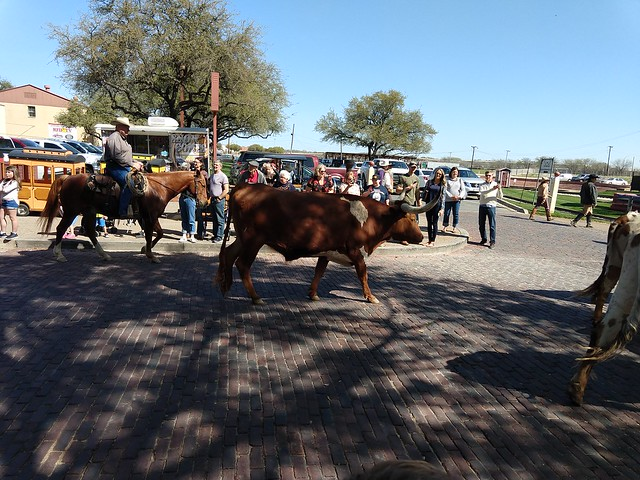 032218 FT Worth Stockyards (123)