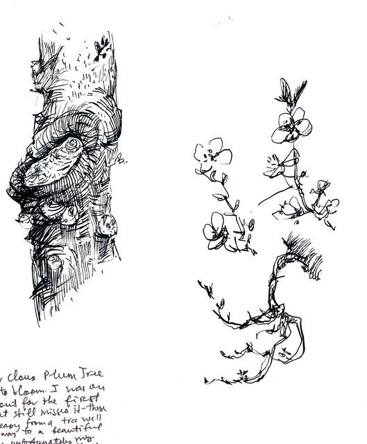 Sketchbook #112: Thundercloud Plum Tree