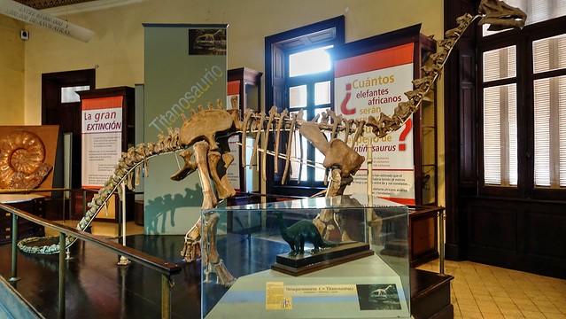 Neuquensaurus - Titanosaurus