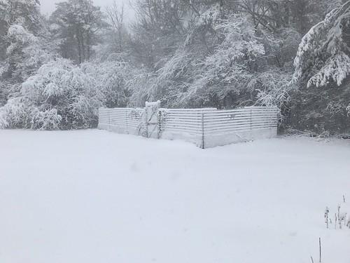 mom's snowy garden IMG_1853