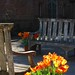 benches with orange tulips by rootcrop54