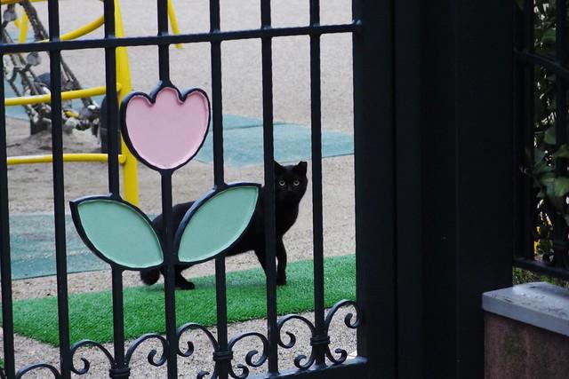 Today's Cat@2018-03-21