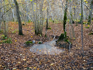 Lomp metsas / Puddle in the woods