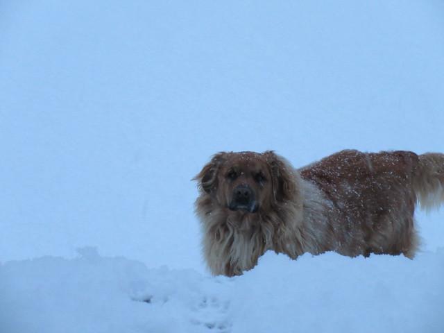 ** Zipper aime bien la neige...**