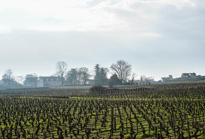 Bourgogne-8.jpg