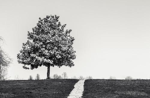 ripley browncounty ohio village tree
