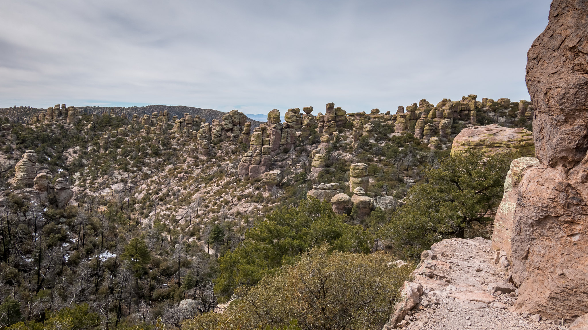 Chiricahua - Arizona - [USA]