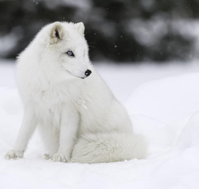 Dressed for winter..., Nikon D850, AF-S VR Nikkor 600mm f/4G ED