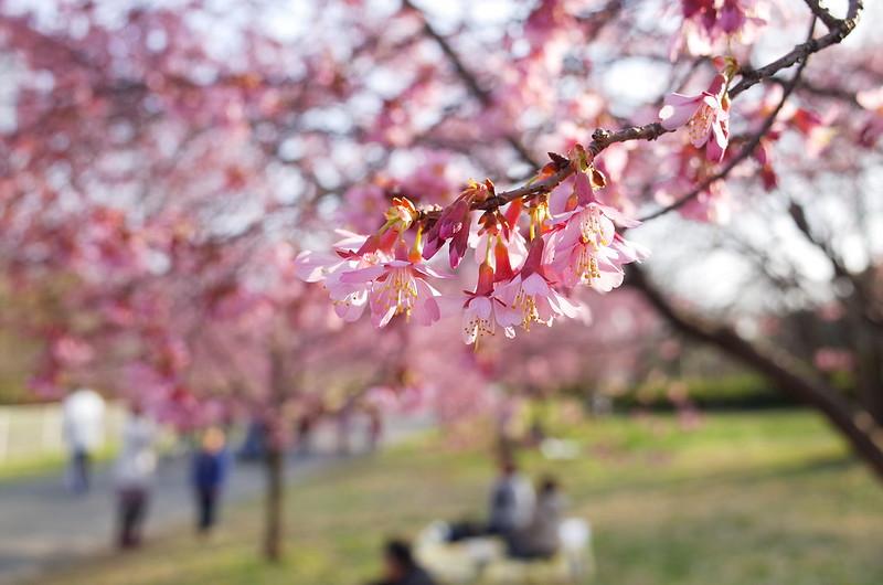 暖かな三月