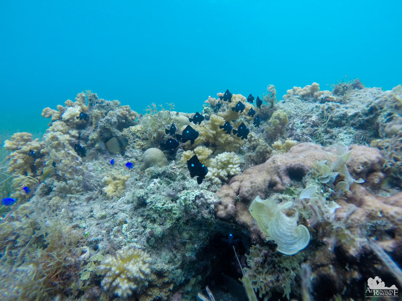 Cool fish at Digyo Marine Sanctuary