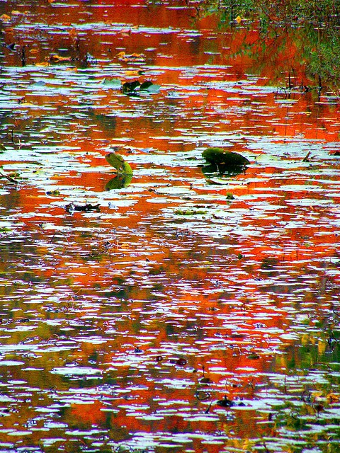 Abstract Red Swamp Reflection