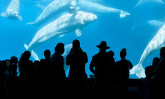 People and Beluga whale
