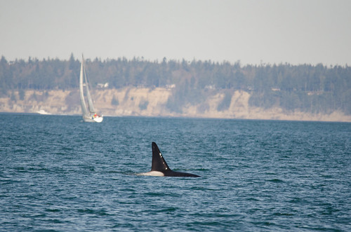 Whale Watching with Island Adventures-142